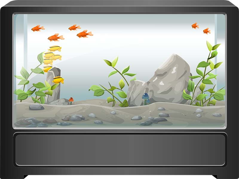 have a fish tank in bedroom