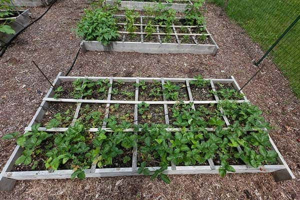 What Does Square Foot Gardening Mean