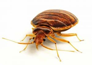 How Long After Bed Bug Treatment Can I Return Home